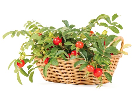 Dogrose in a basket Stock Photo