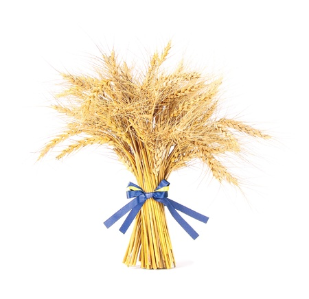 Wheat with bow photo