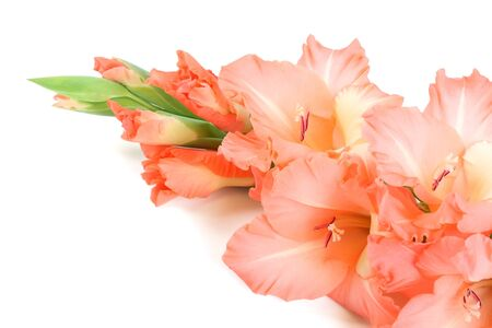 Gladioluses Stock Photo - 11464985