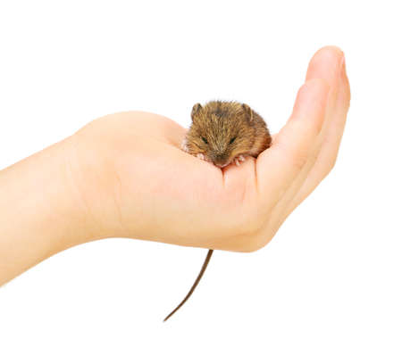 Mouse on arm Stock Photo - 11916734
