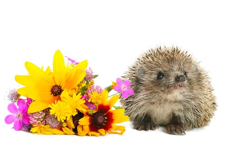 defenceless: Hedgehog with flowers Stock Photo