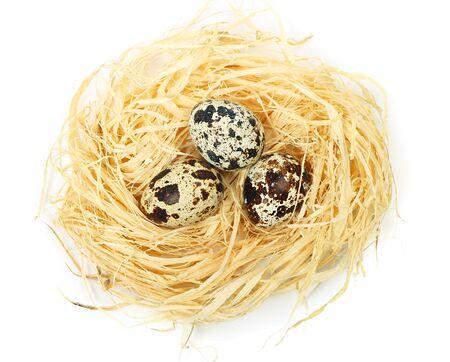 Quail eggs Stock Photo - 12780303