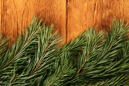 Old wooden background with pine branch, image of flooring board photo