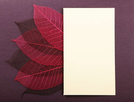 post card: Empty greeting post card on violet cardboard background