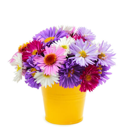 Bouquet of multicolored asters in a bucket on white background photo