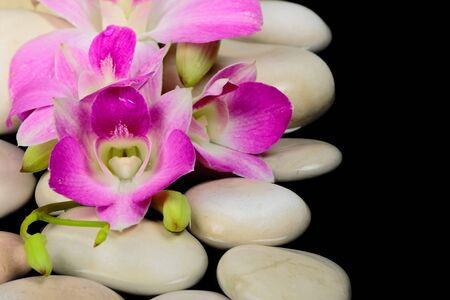 Orchid flowers with spa stones on black background photo