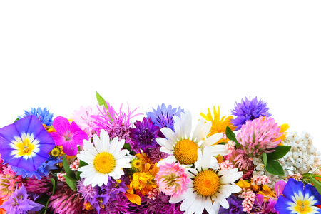 nosegay: Bouquet of miscellaneous field flowers on white background