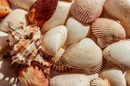 Seashell background, lots of different seashells piled together.