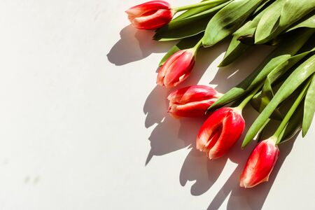 Bouquet of tulips on white background. Spring flowered pattern. Banco de Imagens