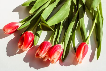 Bouquet of red tulips on white background. Abstract spring background.