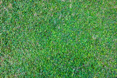 Grass background Golf Courses green lawn pattern textured background. Top view.
