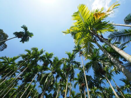 Betel Palm Lanscape Stock Photo - 11763976