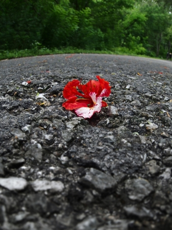Red flower on the ground photo