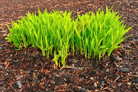 Fresh spring green grass growing on the ground Stock Photo - 12576989