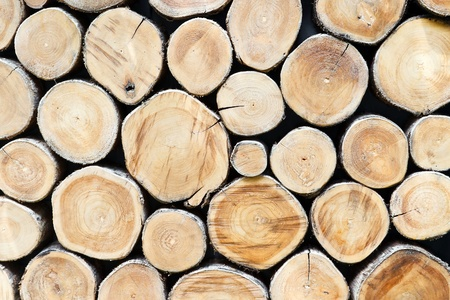 Section plane of natural wood log background Stock Photo - 12577565