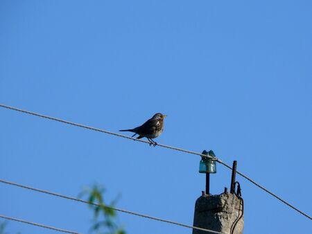Bird. Wires.  photo