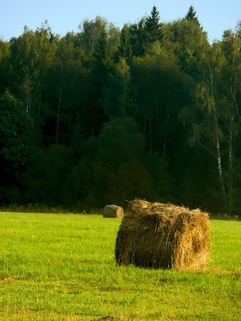 Stacks of oblique hay on a summer meadow. Landscape.  photo