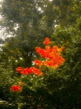 Autumn leaves. Art.  photo