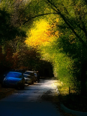 Autumn leaves. Art.  photo