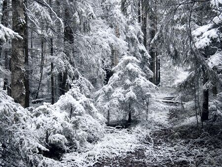 Winter forest. Snow. Stock Photo - 8848739