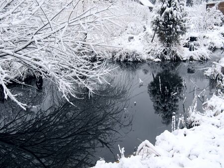 Forest lake. Winter.  Stock Photo
