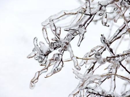The iced over trees. Sleet. Day. Stock Photo