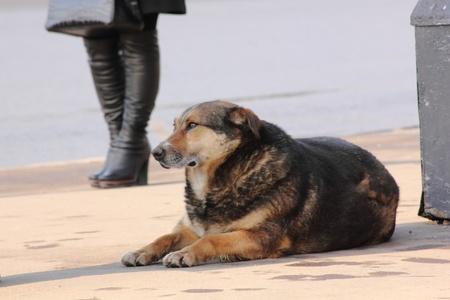 Homeless dog.  photo