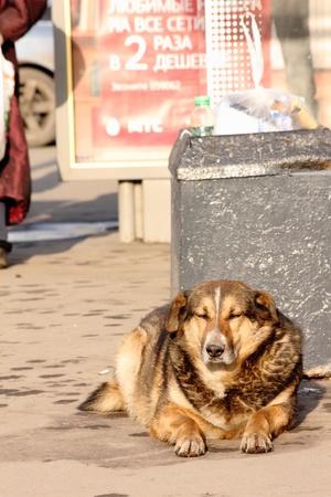 Homeless dog.