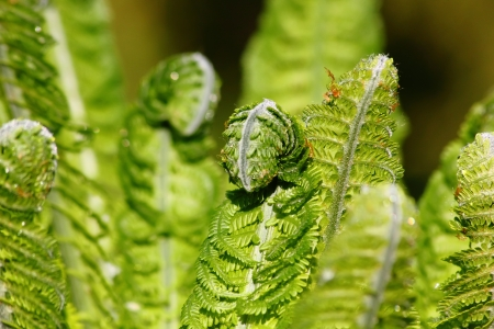 Fern.  Stock Photo