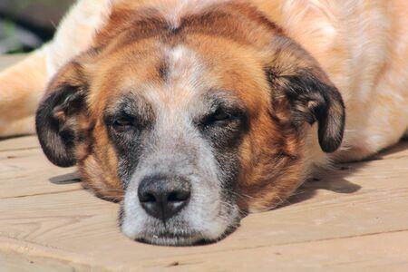 Stray dog.  Stock Photo