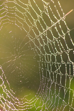 Web. Dew drops on a web.  photo