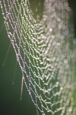 Web. Dew drops on a web.  Stock Photo