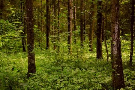 houtsoorten: Donker bos.