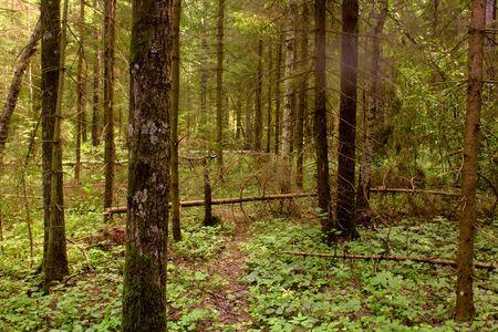 Dark forest.  Stock Photo - 11217327