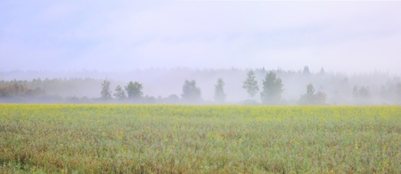 Fog. Morning.  photo