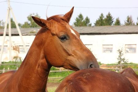 Horse.  photo