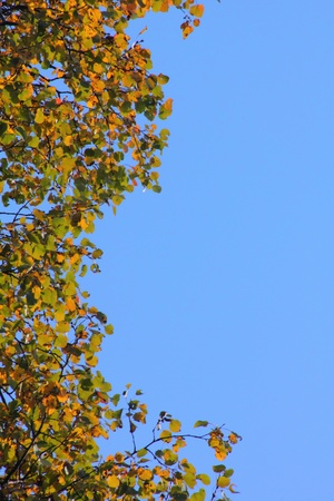 Autumn leaves.  Stock Photo - 11471111