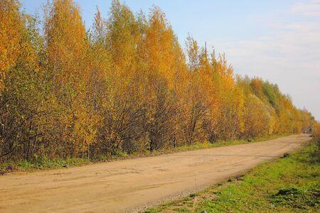 Autumn wood. Yellow foliage. Road.