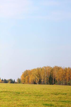 Autumn wood. Yellow foliage. Stock Photo - 11471058