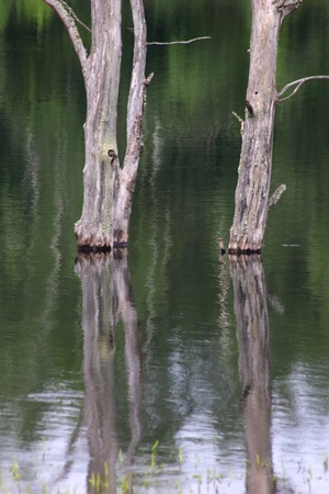 Trees in water. Flood. photo