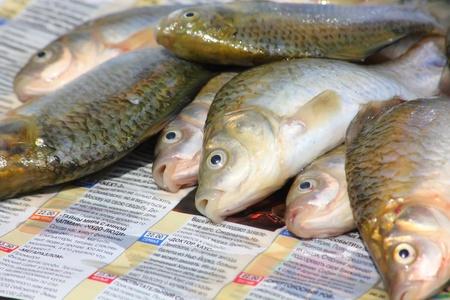 Eviscerated fish. Carp. Stock Photo - 11470991