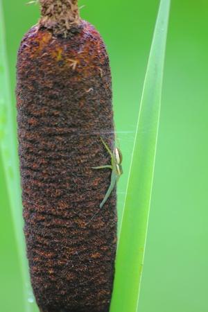 Spider.  photo