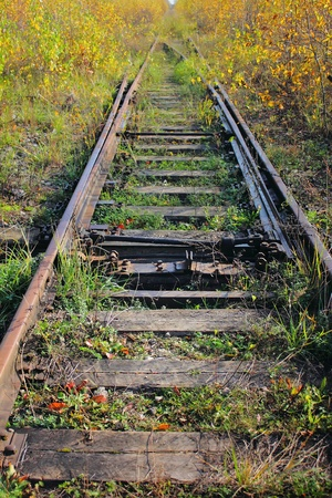 wood railroad: The old railway. Grass.