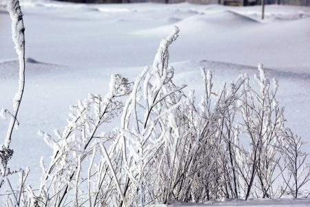 hoarfrost: Snow  Hoarfrost  Dry grass   Stock Photo
