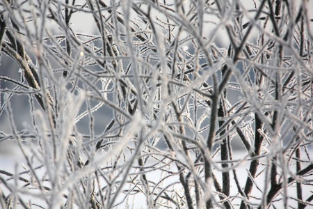 Hoarfrost  Branches of trees   Stock Photo