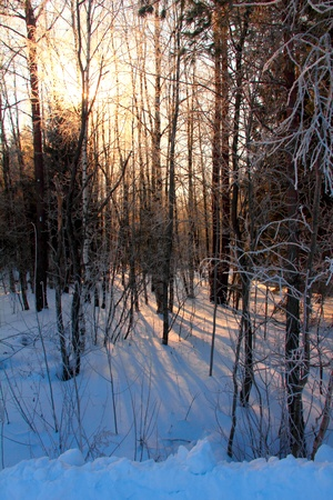non urban scene: Morning  Winter forest