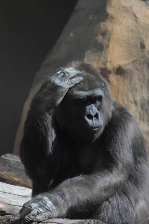 power of thinking: Monkey