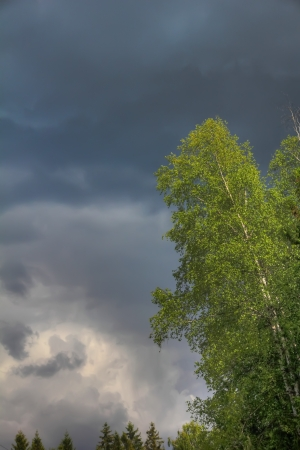 Thunderclouds  Tree   photo