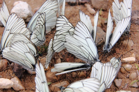 Group of butterflies   photo