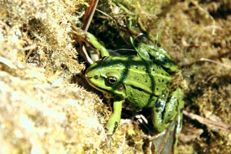 Green frog   Stock Photo - 17090422